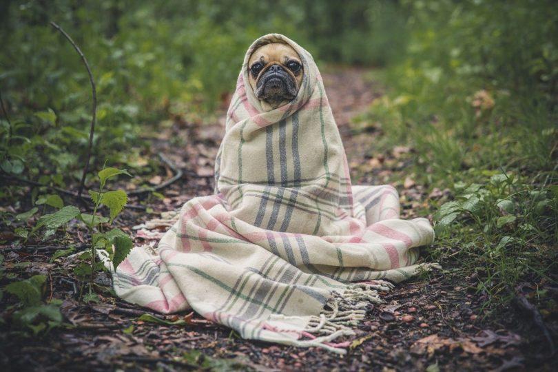 Hundehaftpflichtversicherung Dortmund